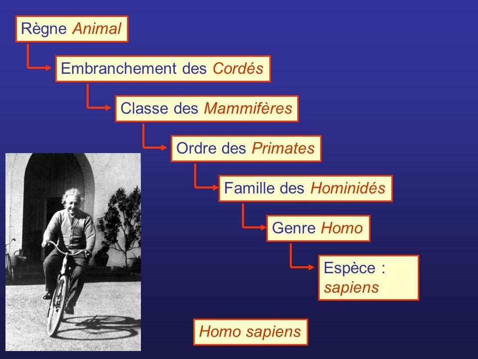 Règne Animal Embranchement des Cordés. Classe des Mammifères. Ordre des Primates. Famille des Hominidés.