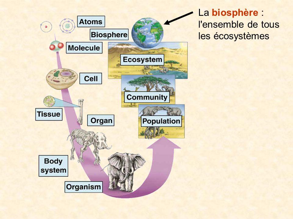 La biosphère : l ensemble de tous les écosystèmes