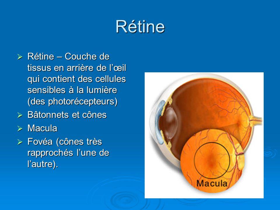 Rétine Rétine – Couche de tissus en arrière de l'œil qui contient des cellules sensibles à la lumière (des photorécepteurs)