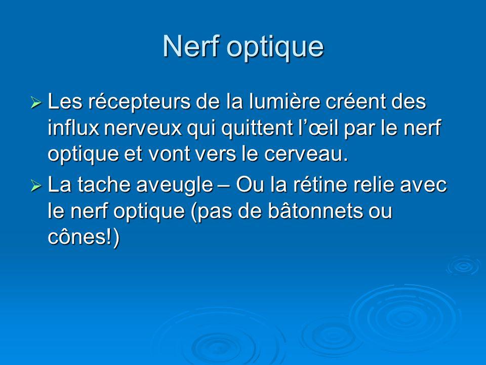 Nerf optique Les récepteurs de la lumière créent des influx nerveux qui quittent l'œil par le nerf optique et vont vers le cerveau.