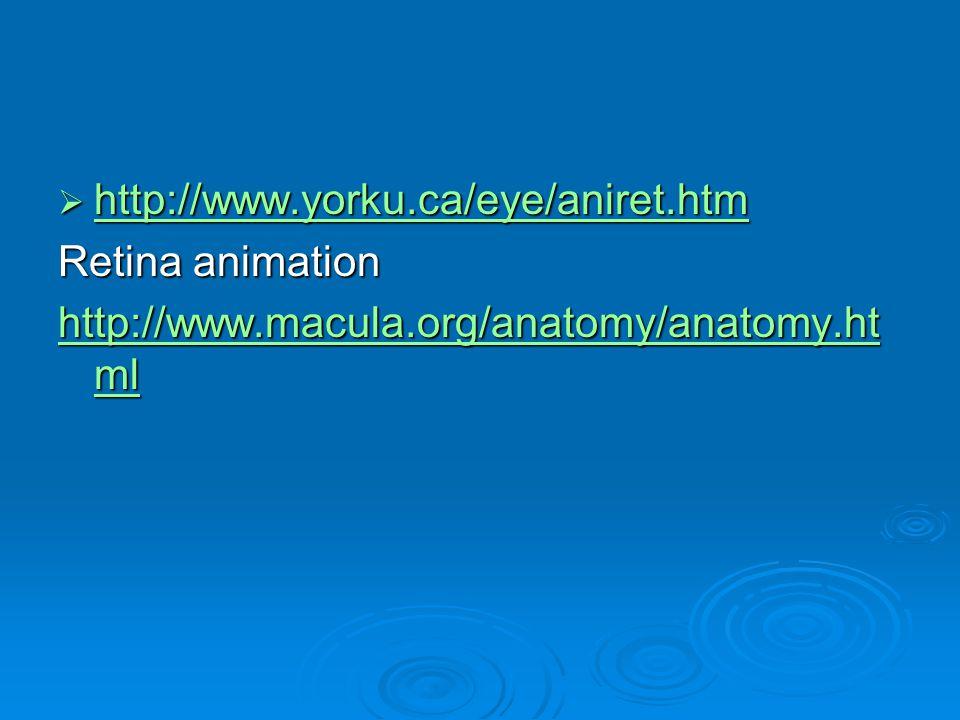 http://www.yorku.ca/eye/aniret.htm Retina animation http://www.macula.org/anatomy/anatomy.html