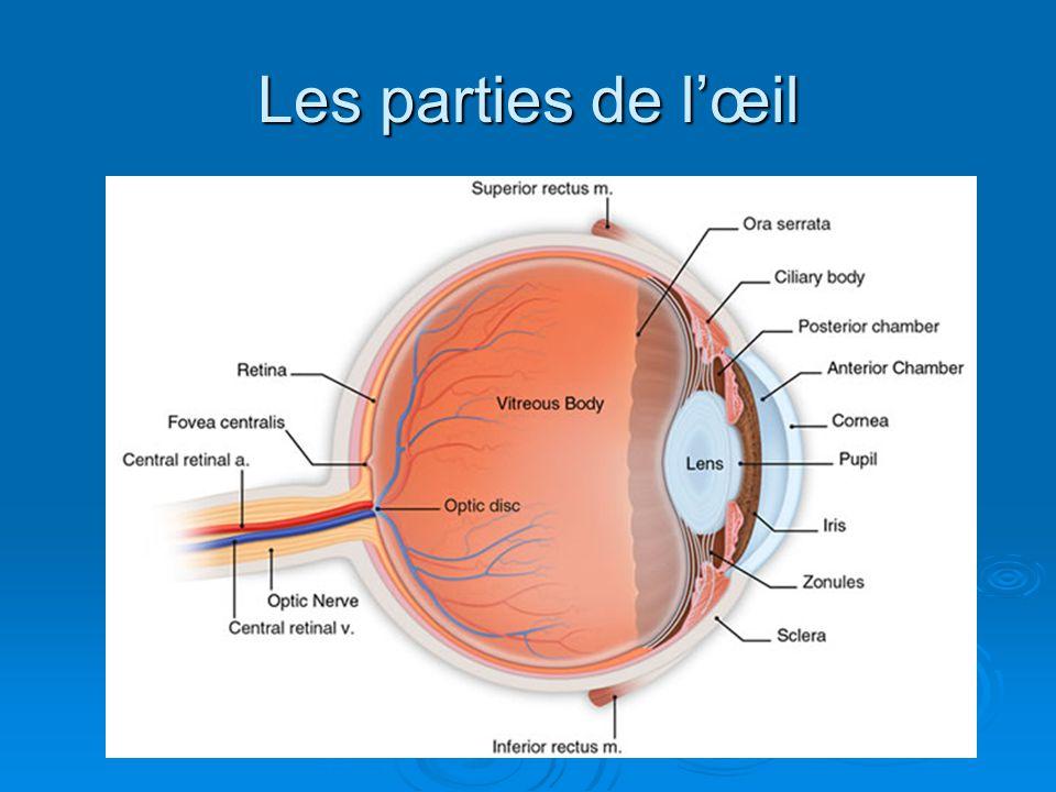 Les parties de l'œil