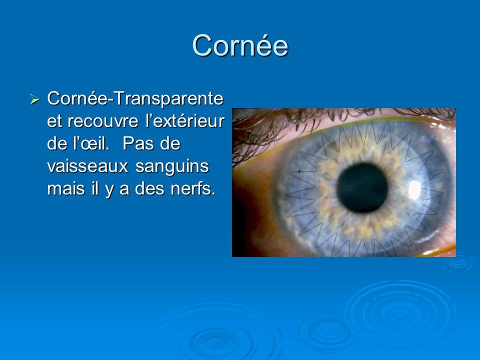 Cornée Cornée-Transparente et recouvre l'extérieur de l'œil.