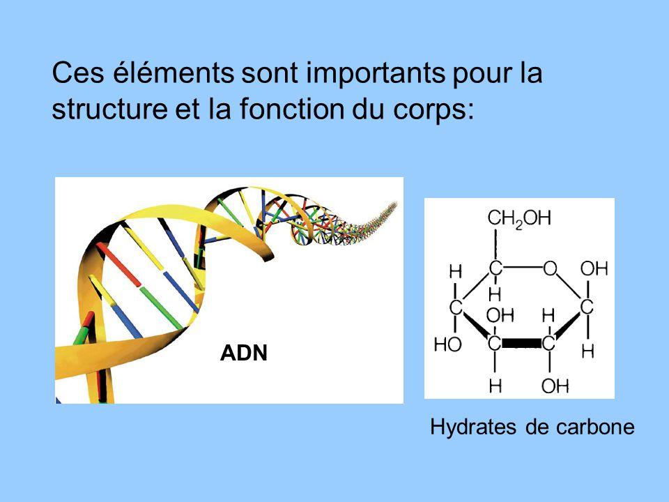 Ces éléments sont importants pour la structure et la fonction du corps:
