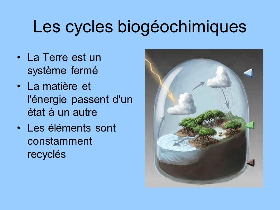 Les cycles biogéochimiques