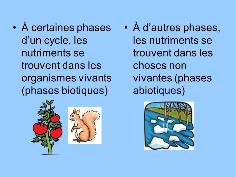 À certaines phases d'un cycle, les nutriments se trouvent dans les organismes vivants (phases biotiques)