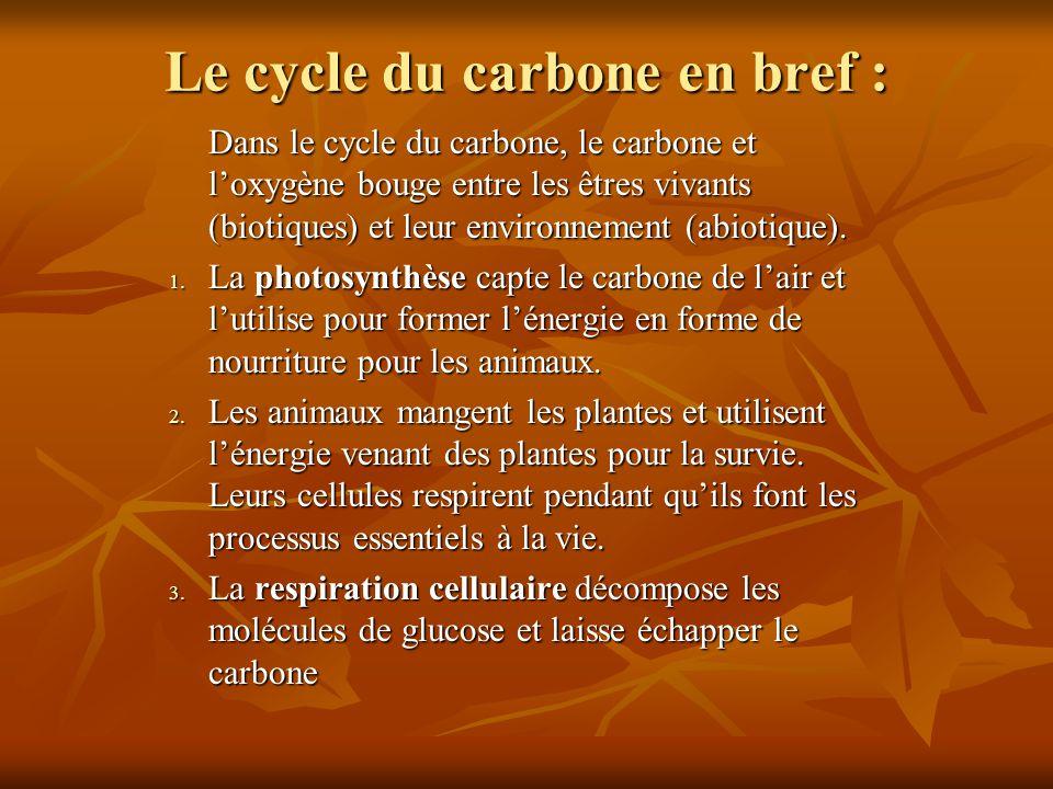 Le cycle du carbone en bref :