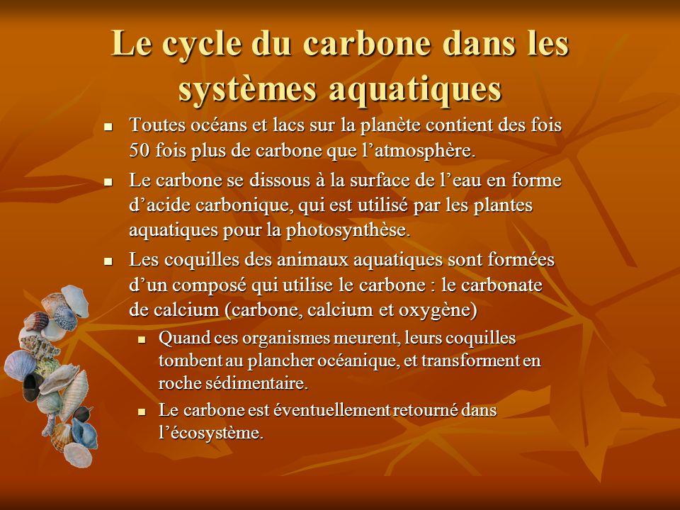Le cycle du carbone dans les systèmes aquatiques