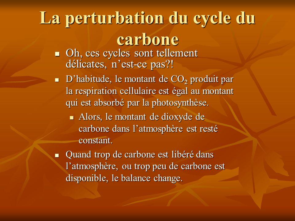 La perturbation du cycle du carbone