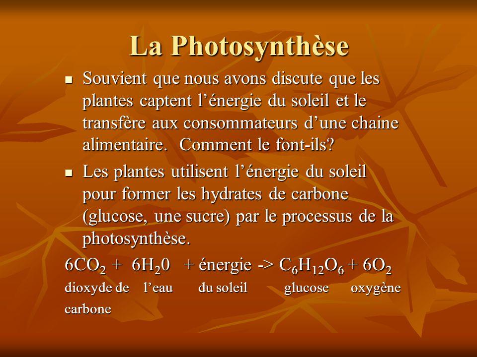 La Photosynthèse
