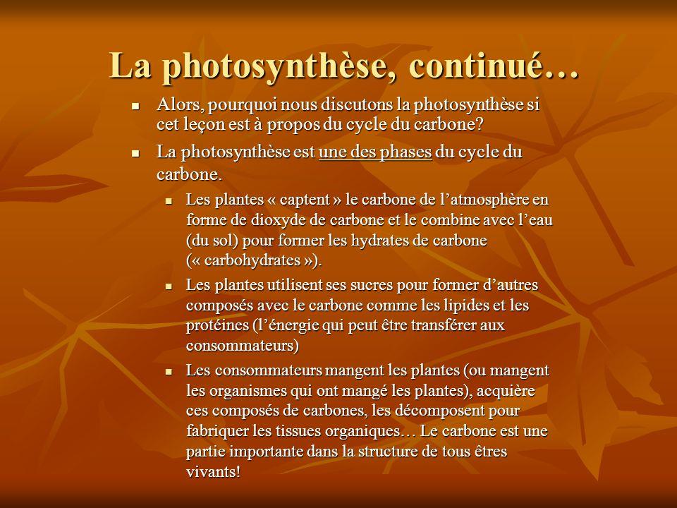 La photosynthèse, continué…