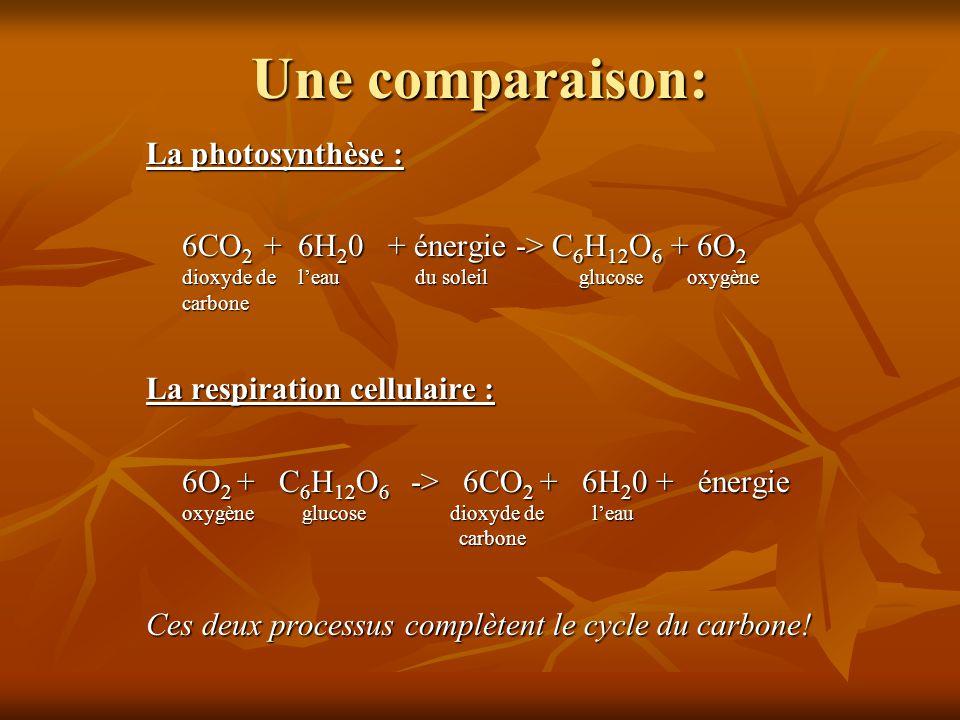 Une comparaison: La photosynthèse :