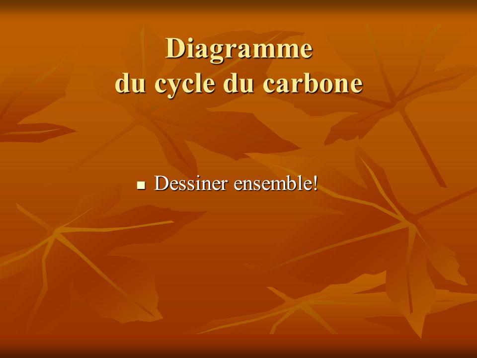 Diagramme du cycle du carbone