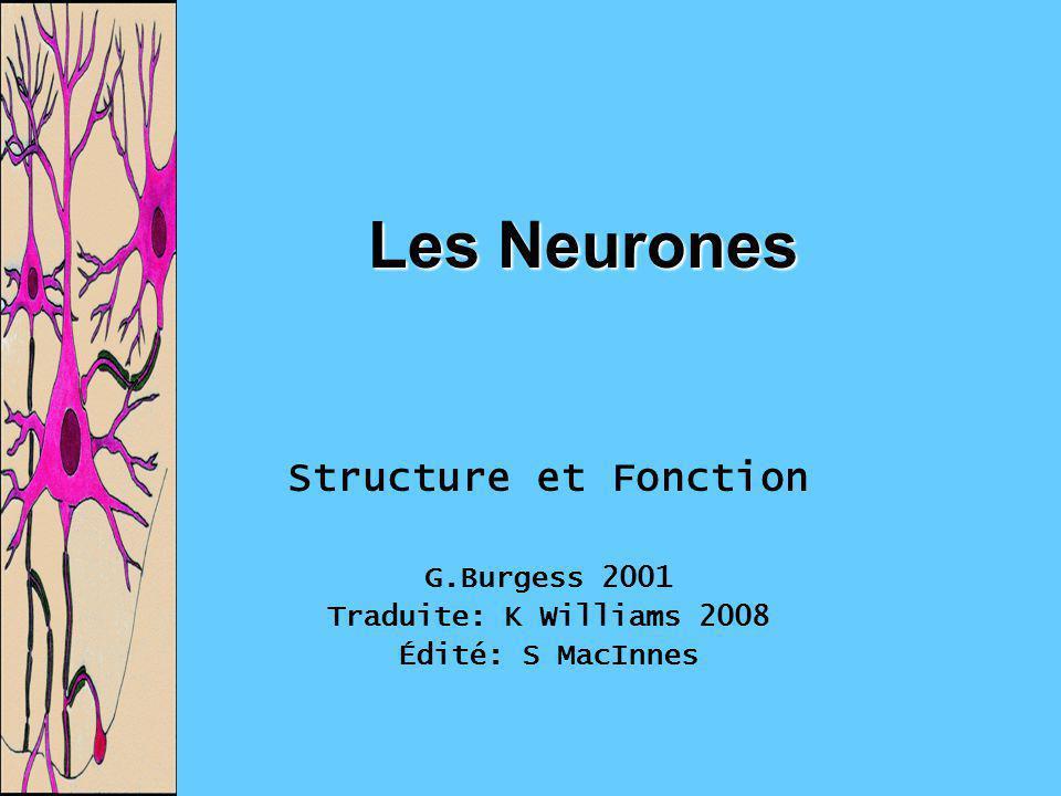 Les Neurones Structure et Fonction G.Burgess 2001