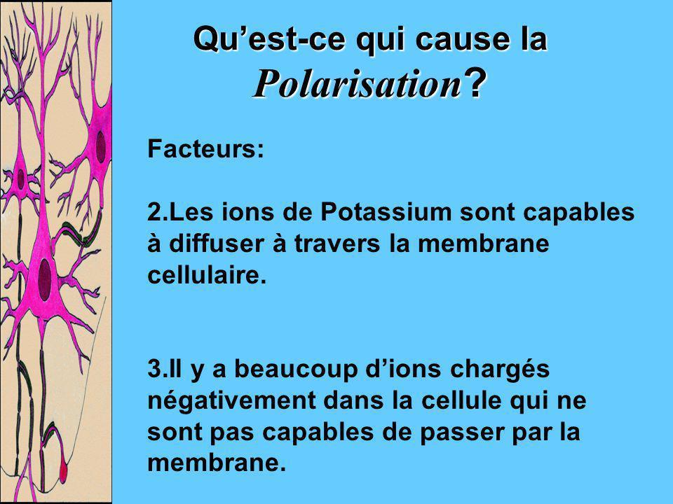 Qu'est-ce qui cause la Polarisation