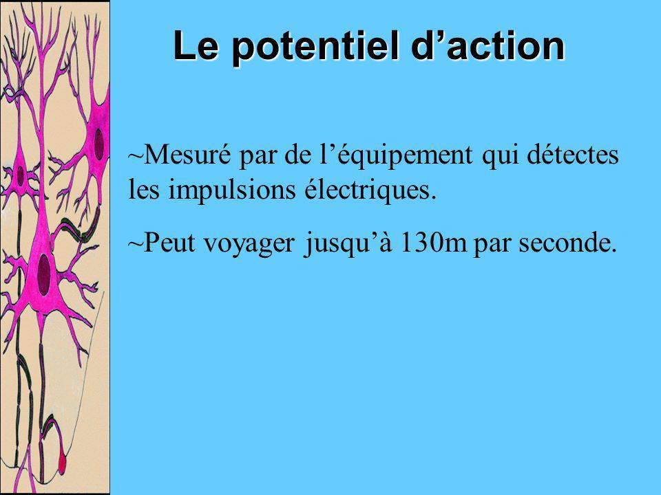 Le potentiel d'action Mesuré par de l'équipement qui détectes les impulsions électriques.