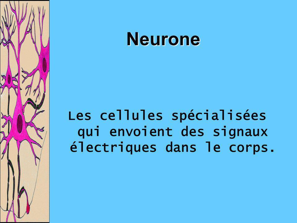 Neurone Les cellules spécialisées qui envoient des signaux électriques dans le corps.