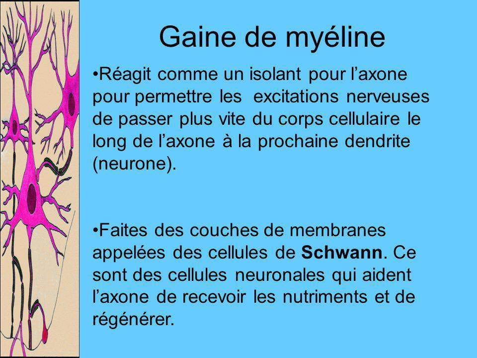 Gaine de myéline