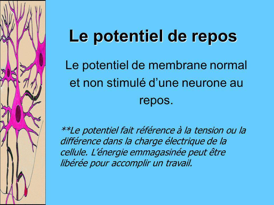 Le potentiel de membrane normal et non stimulé d'une neurone au repos.