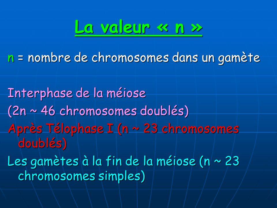 La valeur « n » n = nombre de chromosomes dans un gamète