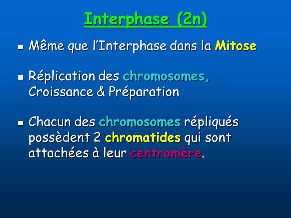 Interphase (2n) Même que l'Interphase dans la Mitose