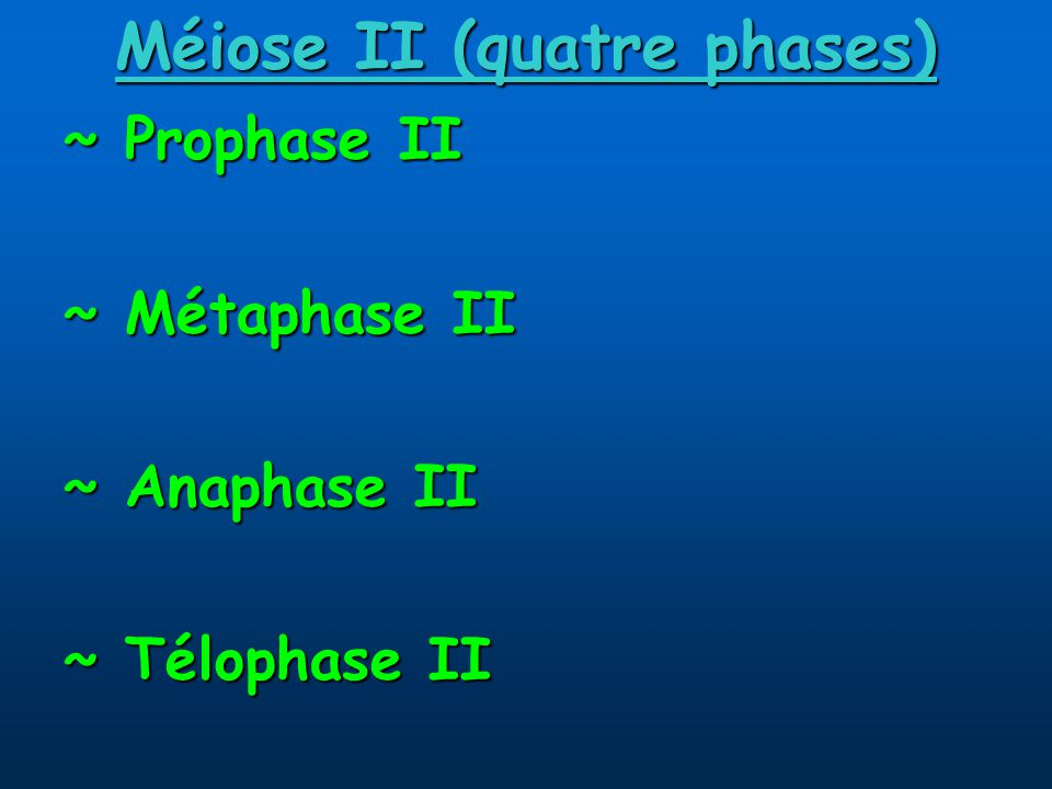 Méiose II (quatre phases)