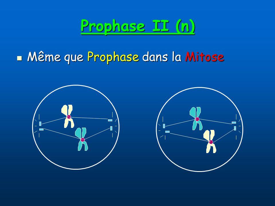 Prophase II (n) Même que Prophase dans la Mitose