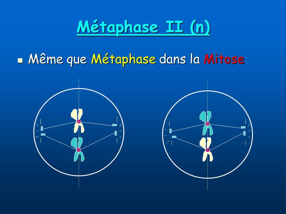 Métaphase II (n) Même que Métaphase dans la Mitose