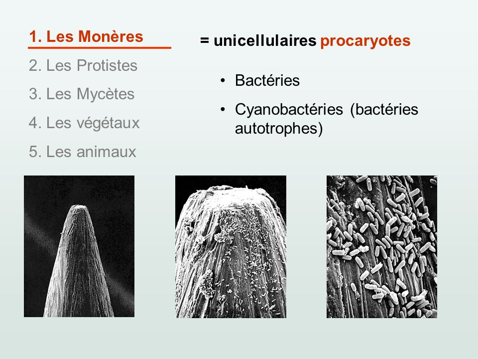 1. Les Monères 2. Les Protistes. 3. Les Mycètes. 4. Les végétaux. 5. Les animaux. = unicellulaires procaryotes.