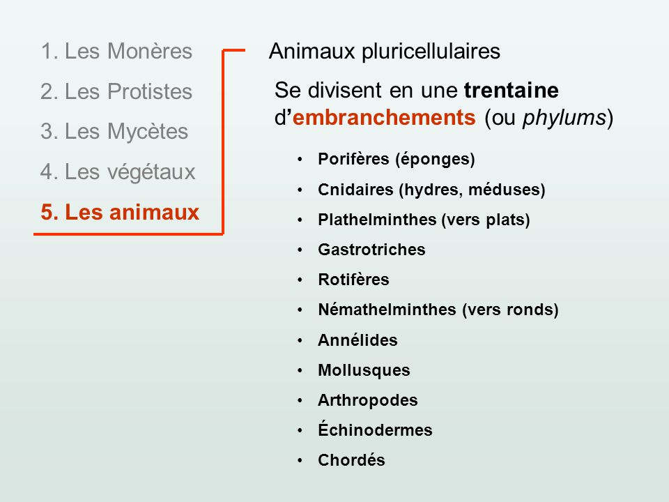 Animaux pluricellulaires