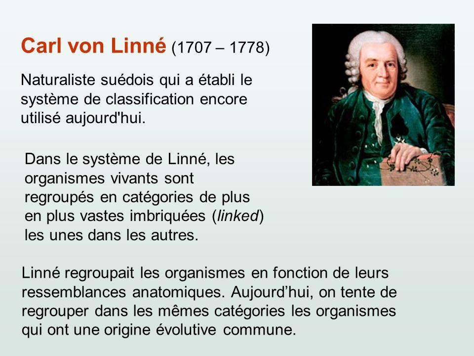 Carl von Linné (1707 – 1778) Naturaliste suédois qui a établi le système de classification encore utilisé aujourd hui.