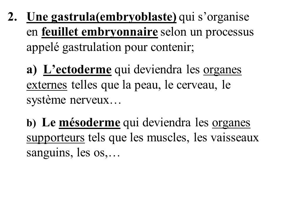 2. Une gastrula(embryoblaste) qui s'organise en feuillet embryonnaire selon un processus appelé gastrulation pour contenir;
