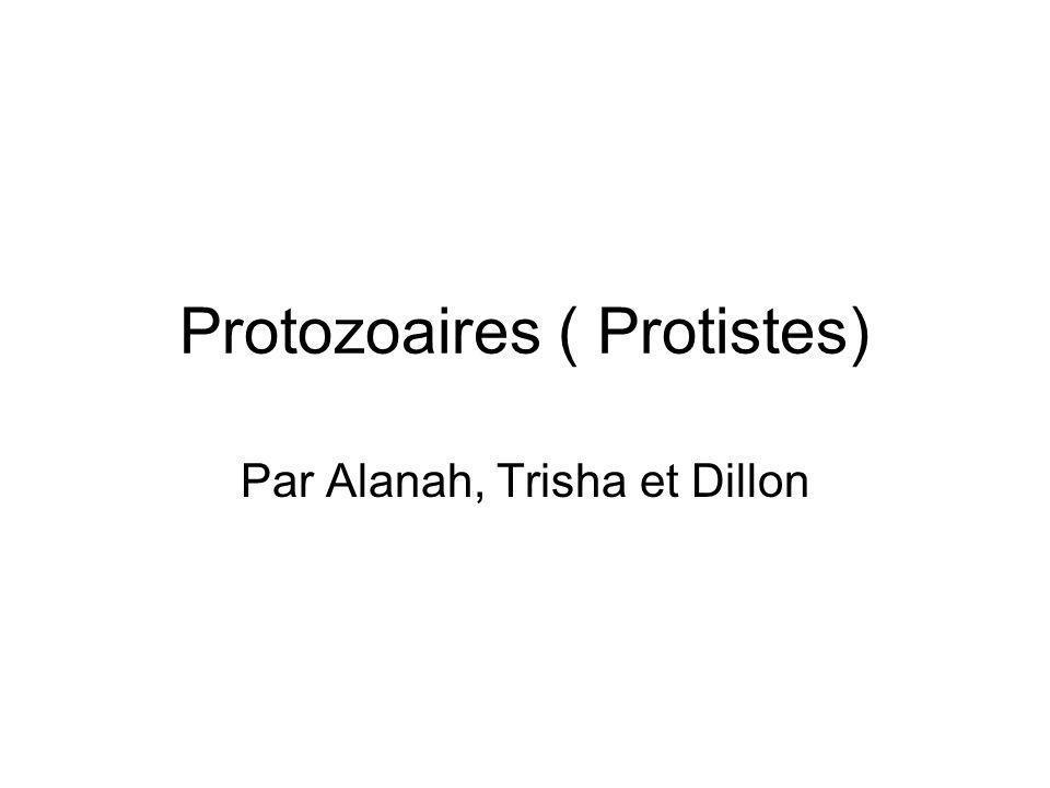 Protozoaires ( Protistes)