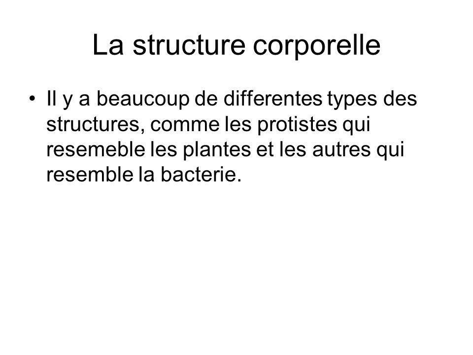 La structure corporelle