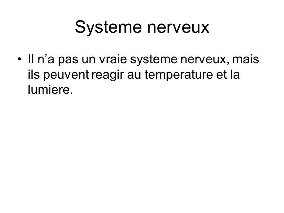 Systeme nerveux Il n'a pas un vraie systeme nerveux, mais ils peuvent reagir au temperature et la lumiere.