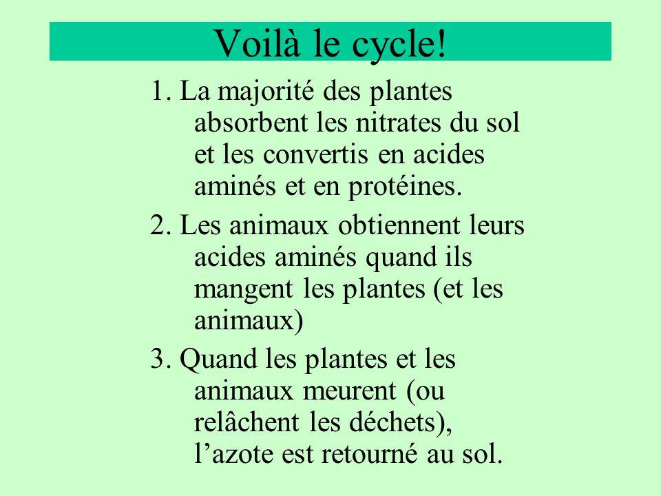 Voilà le cycle! 1. La majorité des plantes absorbent les nitrates du sol et les convertis en acides aminés et en protéines.