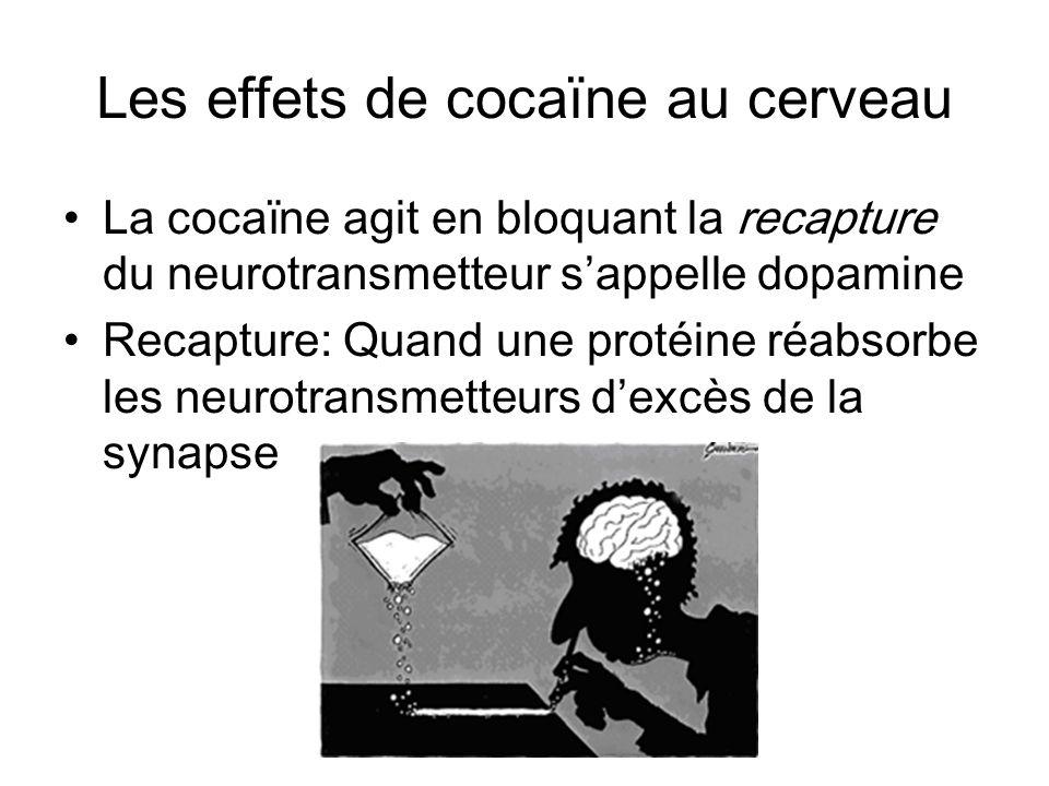 Les effets de cocaïne au cerveau