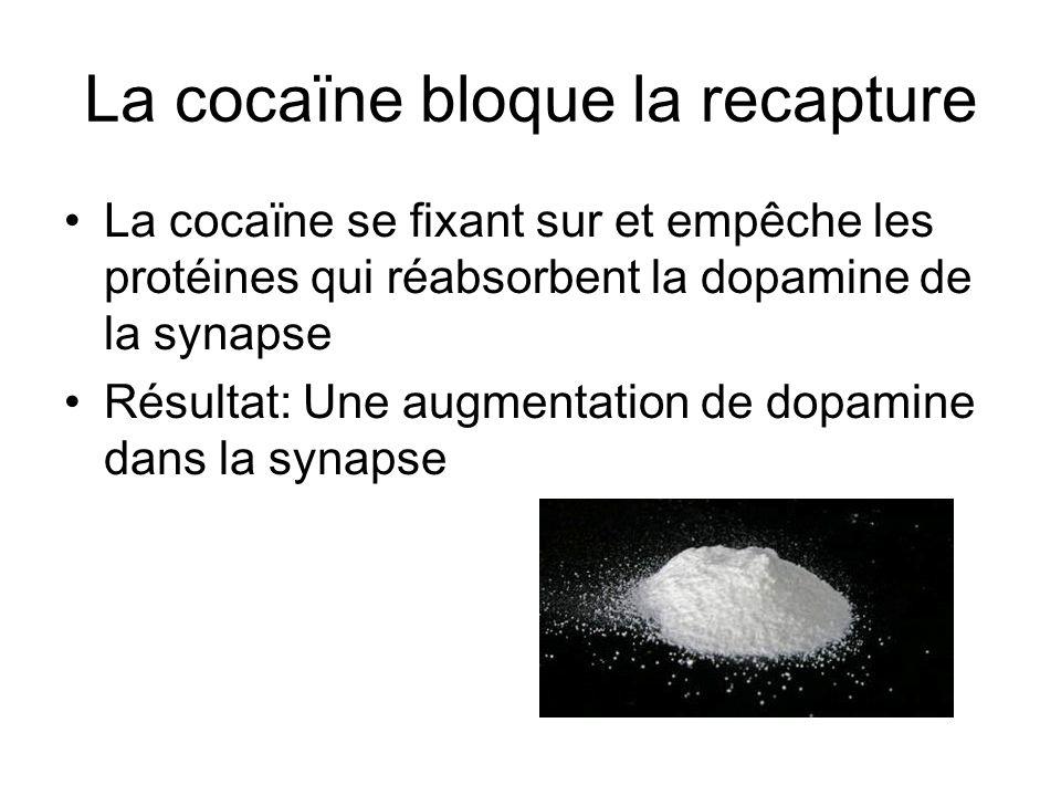 La cocaïne bloque la recapture