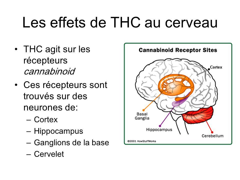 Les effets de THC au cerveau
