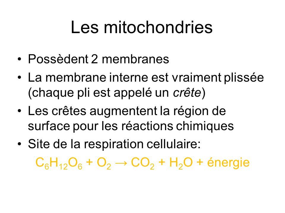 Les mitochondries Possèdent 2 membranes
