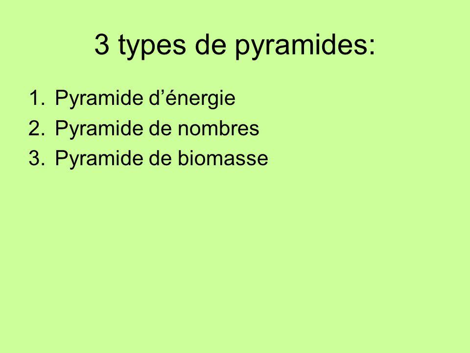 3 types de pyramides: Pyramide d'énergie Pyramide de nombres