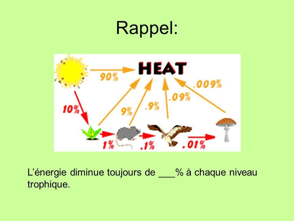 Rappel: L'énergie diminue toujours de ___% à chaque niveau trophique.