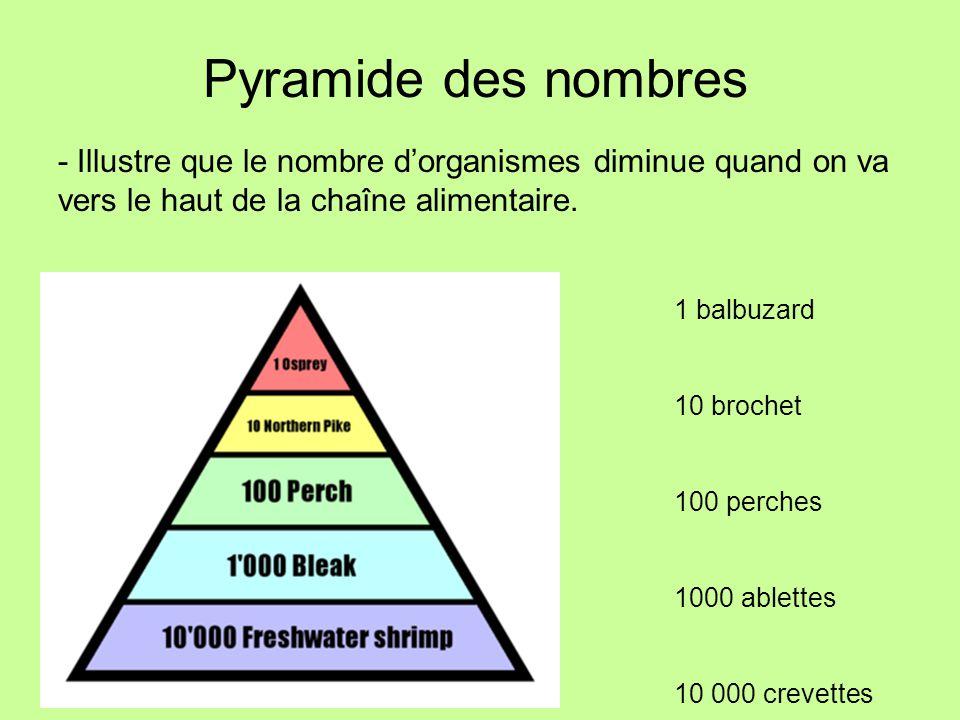 Pyramide des nombres - Illustre que le nombre d'organismes diminue quand on va vers le haut de la chaîne alimentaire.