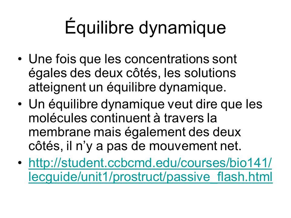 Équilibre dynamique Une fois que les concentrations sont égales des deux côtés, les solutions atteignent un équilibre dynamique.