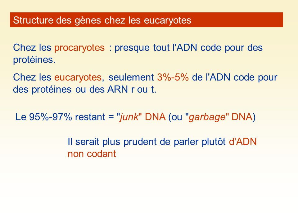 Structure des gènes chez les eucaryotes
