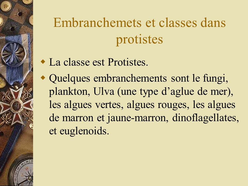 Embranchemets et classes dans protistes