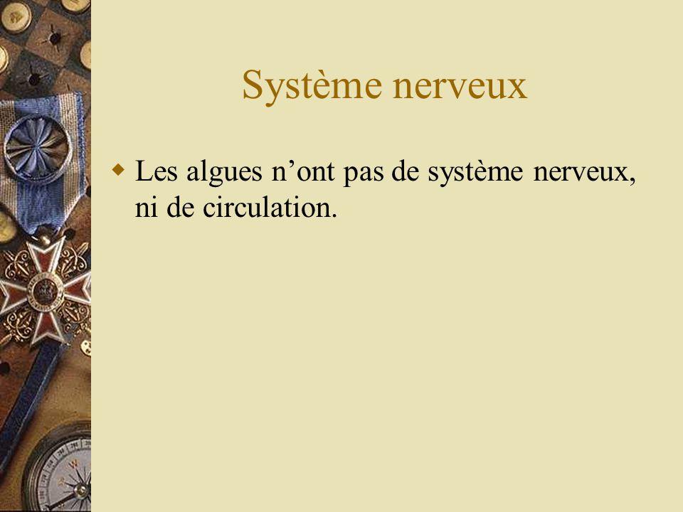 Système nerveux Les algues n'ont pas de système nerveux, ni de circulation.