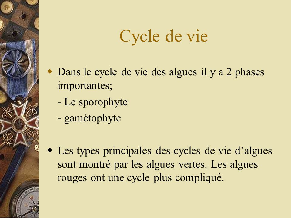 Cycle de vie Dans le cycle de vie des algues il y a 2 phases importantes; - Le sporophyte. - gamétophyte.
