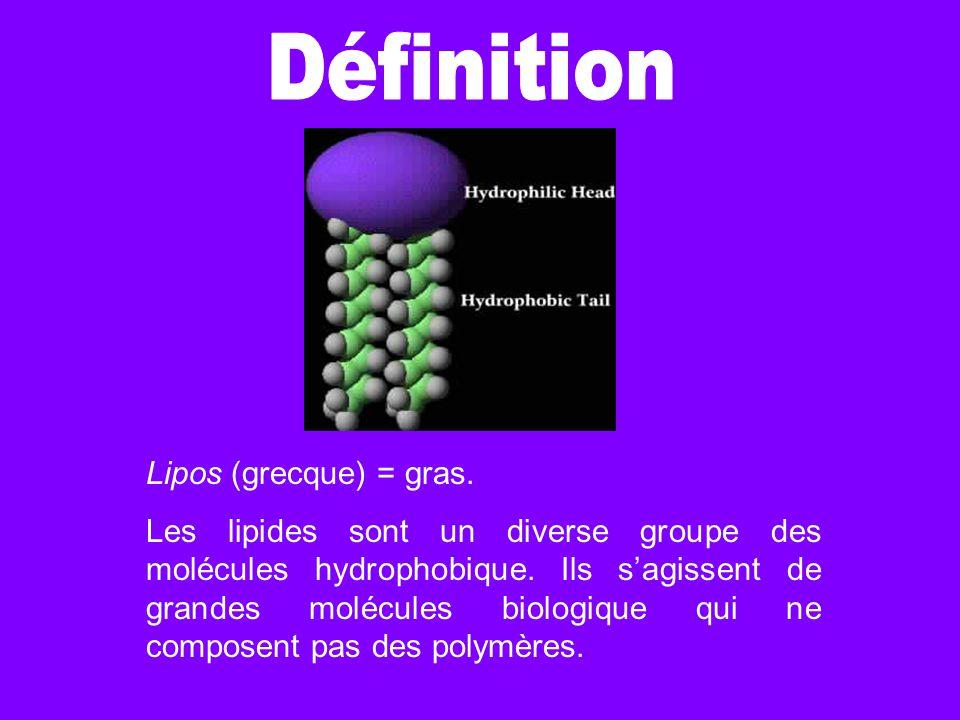 Définition Lipos (grecque) = gras.