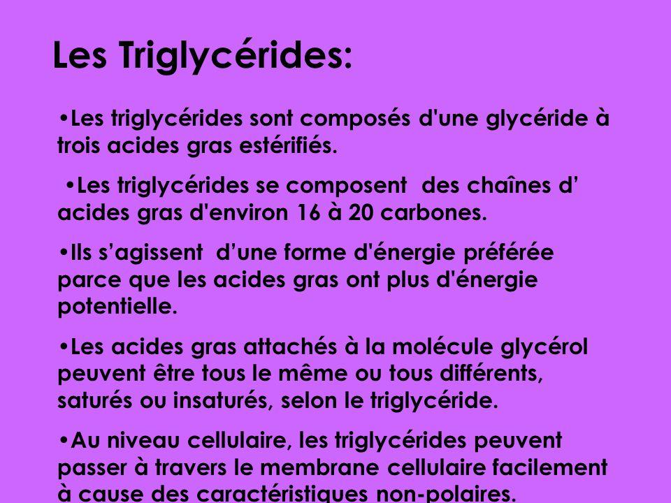 Les Triglycérides: •Les triglycérides sont composés d une glycéride à trois acides gras estérifiés.